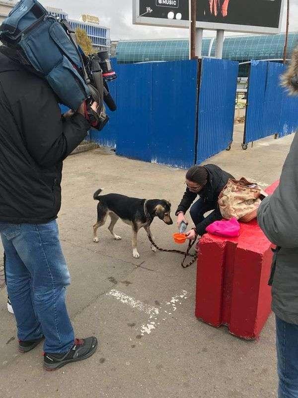 Потерянная неделю назад в Домодеово собака нашлась