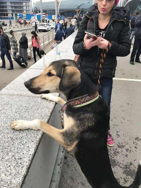 В Домодедово нашлась собака