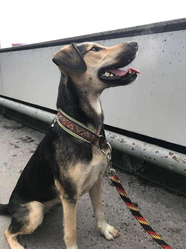 В «Домодедово» нашли потерянную неделю назад собаку пассажирки. ФОТО
