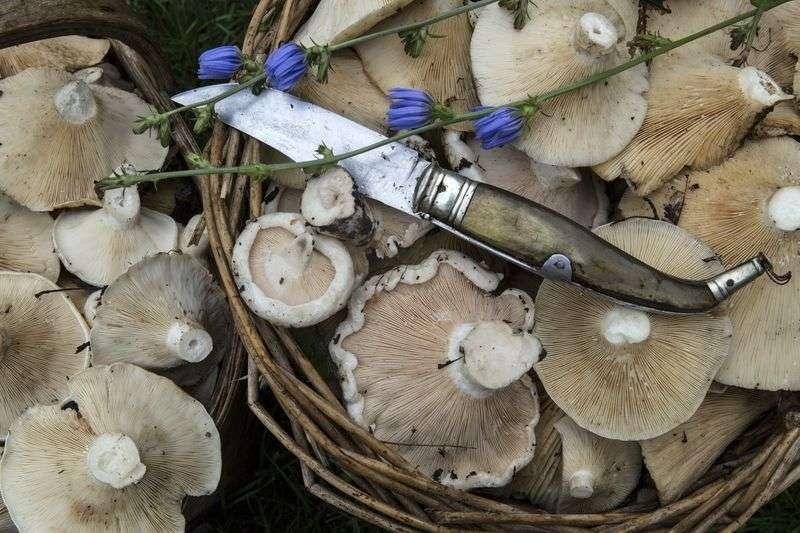 В регионе растет число отравлений грибами