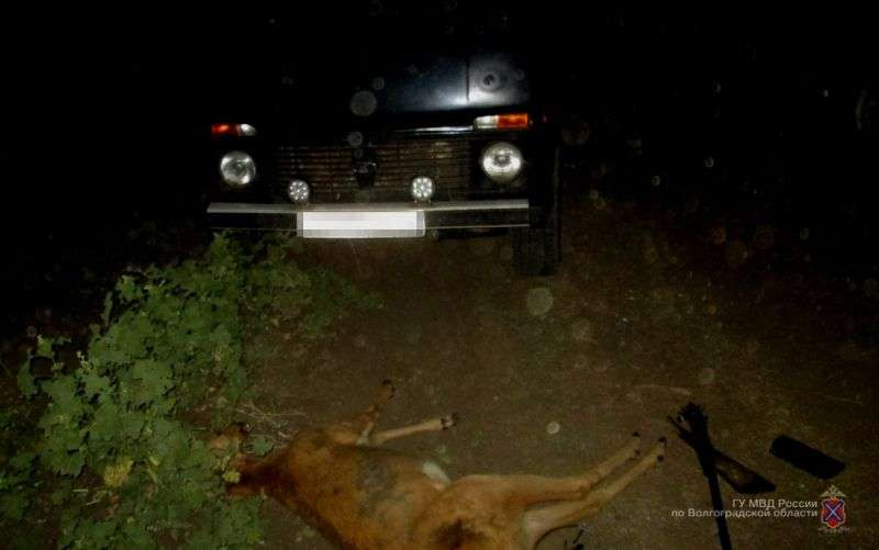 Ветврач из Михайловки попался на убийстве косуль