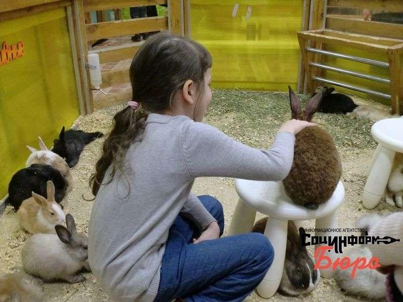 Зверюшки как игрушки: Волгоградка просит проверить трогательные зоопарки