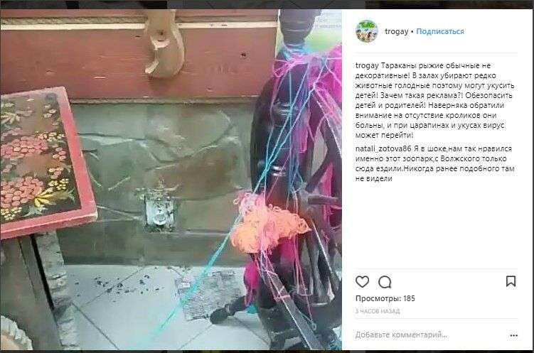 сотрудники трогательного зоопарка рассказали о тараканах и больных животных