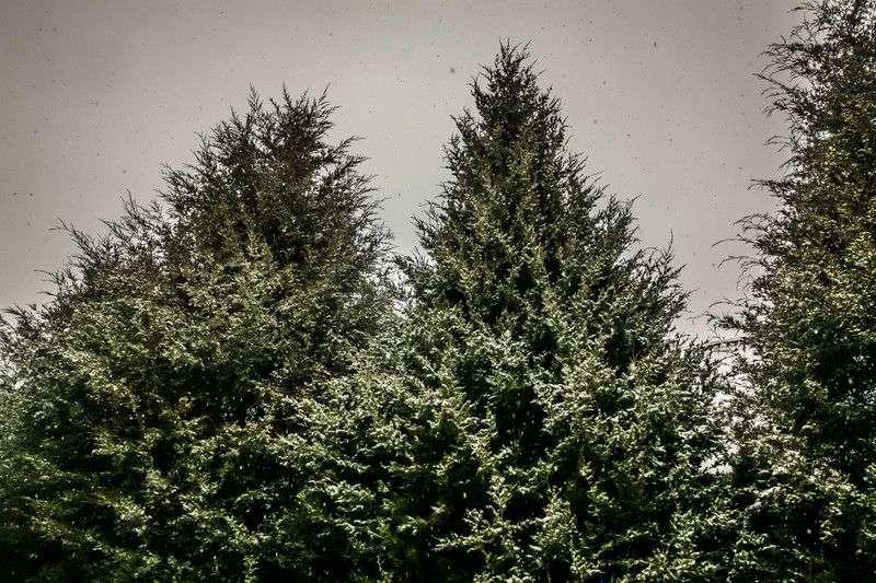 Волгоградскую область ожидают заморозки