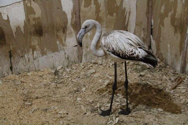 Для фламинго из Палласовки нашли дом