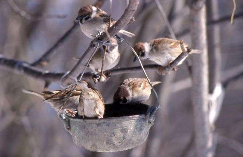 Волгоградцев просят подкармливать птиц