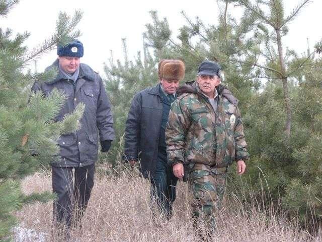 В регионе усилили охрану молодых ёлок