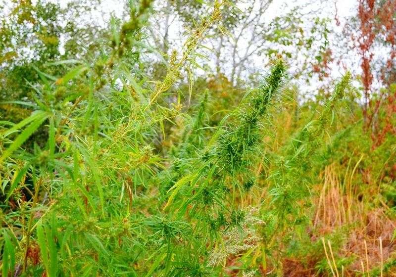 У жителя Еланского района нашли 16 мешков марихуаны