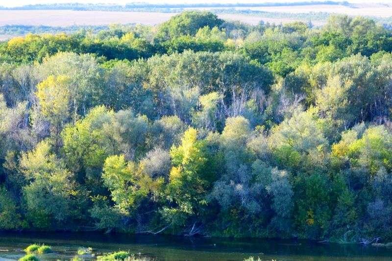 Лес рубят – щепки летят