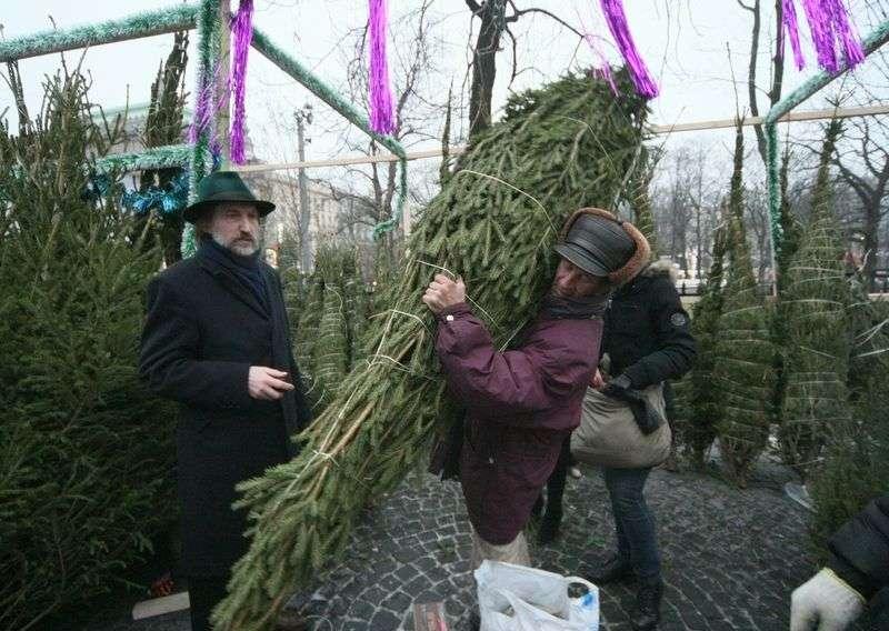 Стали известны места продажи ёлок в Волгограде