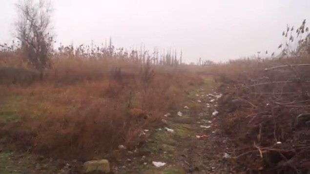 Камыш и мусор