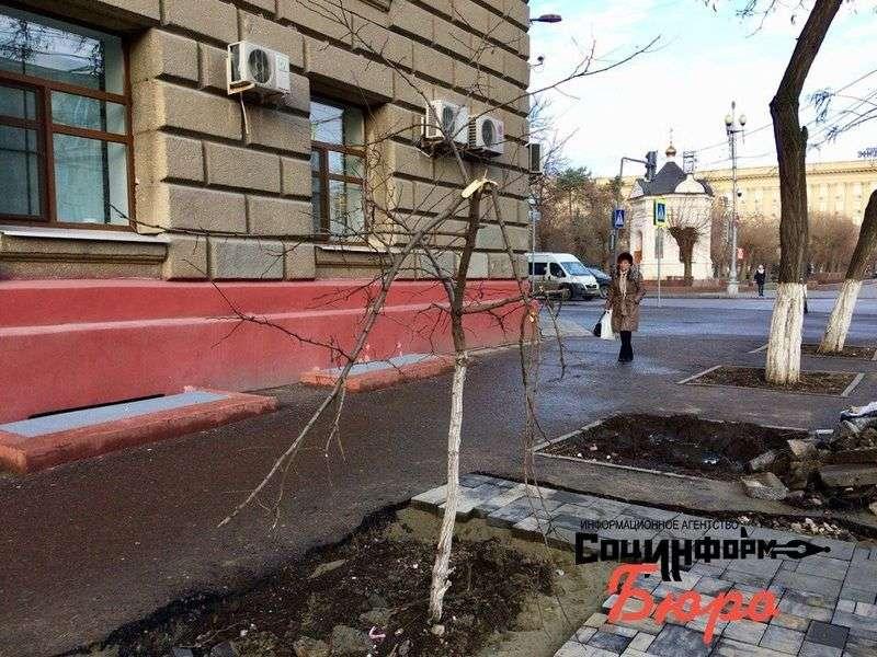 При монтаже остановки в центре Волгограда покалечили деревья