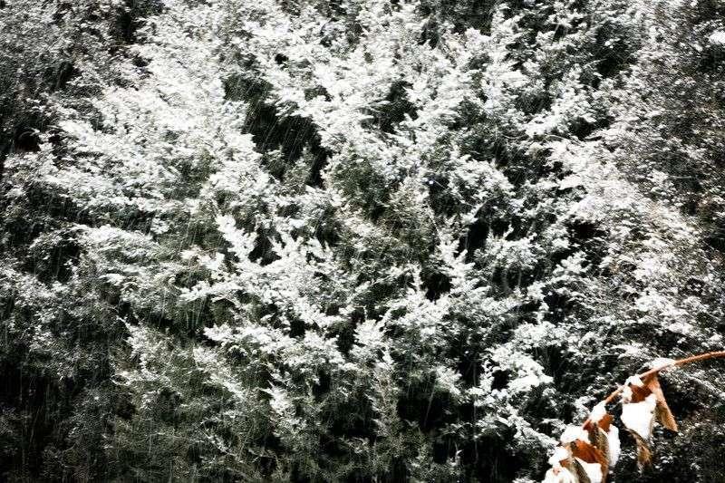 Новая неделя в Волгограде начнется с метели