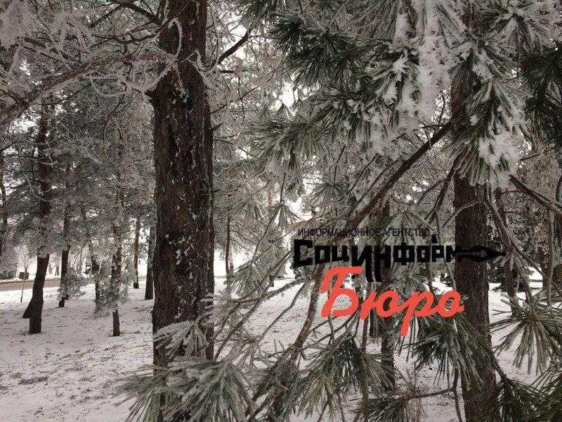 Новогодняя погода придет в Волгоград после 22 декабря