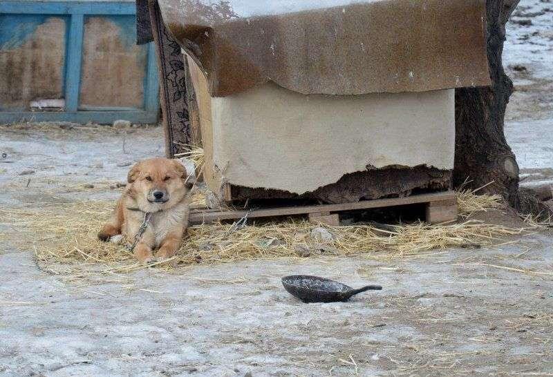 В Волжском открылся новый приют для собак