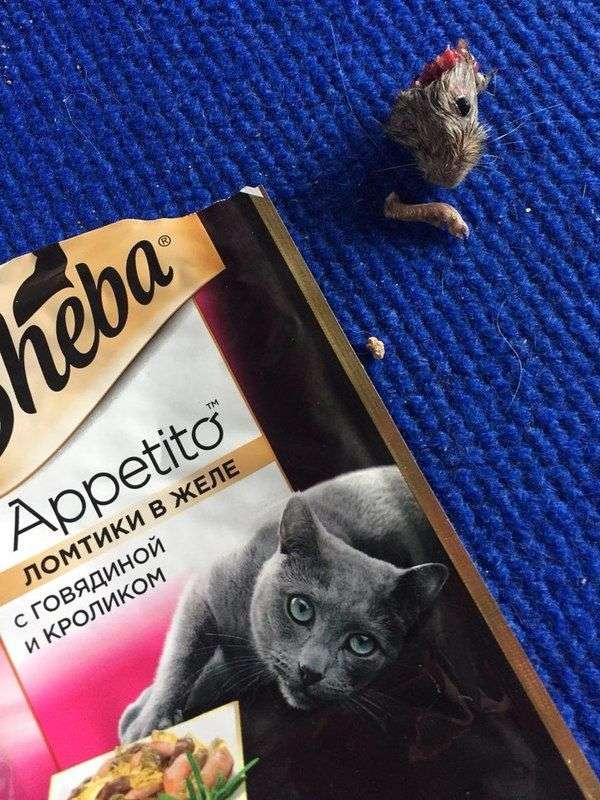 Волгоградская мышь оправдана и, возможно, здорова