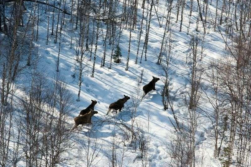 Житель Серафимовичского района ответит за лося