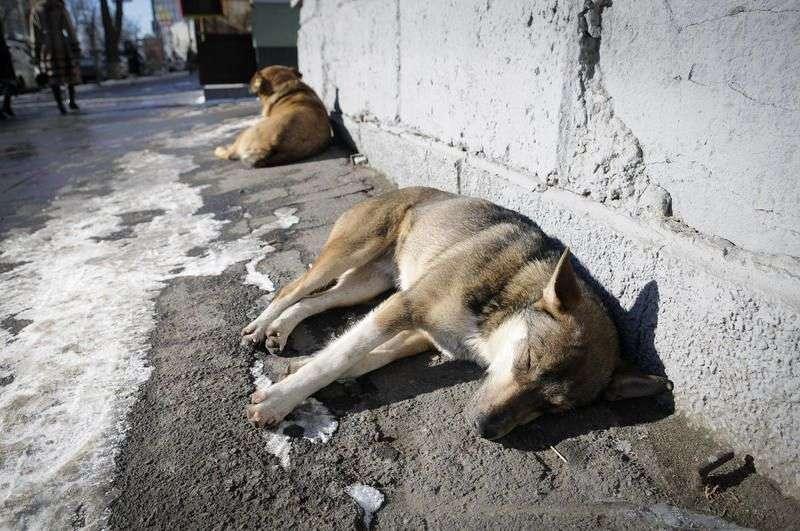 Больше 1 млн рублей потратят в Волжском на убийство бездомных животных