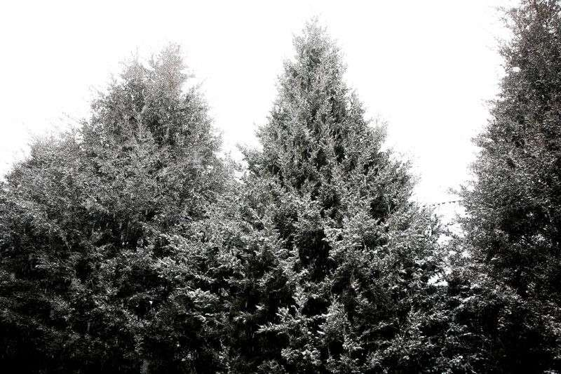 В Волгограде начало рабочей недели будет снежным
