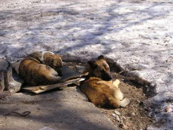 Как цивилизованно бороться с бродячими собаками в Волгограде