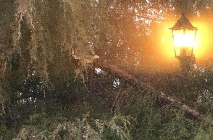 Метель поломала ветки деревьев
