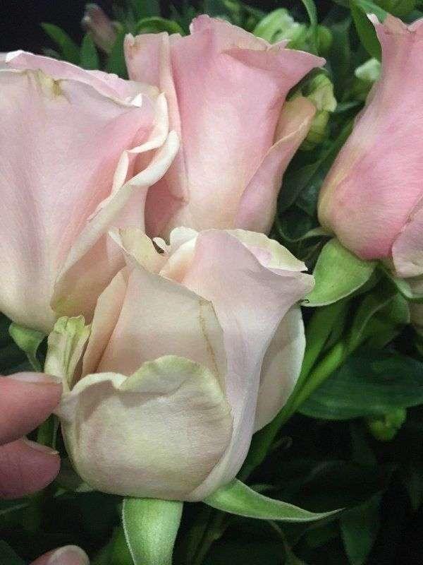 Волгоградские флористы поделились секретами при выборе цветов