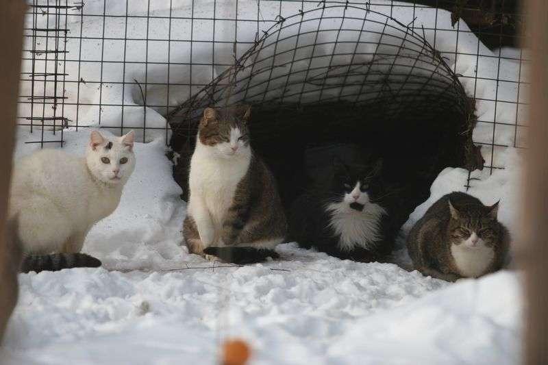 Молодежи Волгограда расскажут, как помогать бездомным кошкам