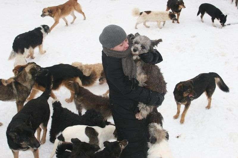 Волгоградские депутаты отказались от фразы «уничтожение животных»