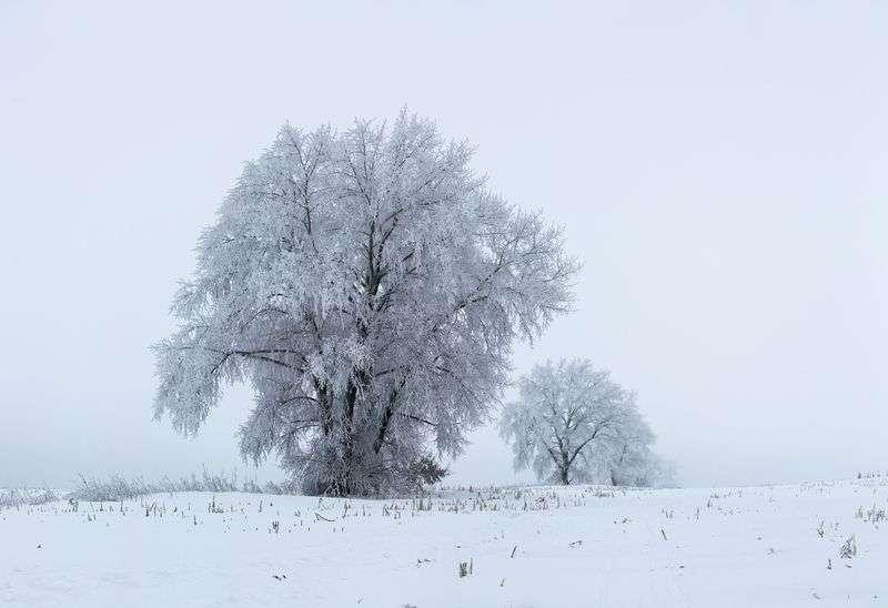 Волгоградскую область снова подморозит