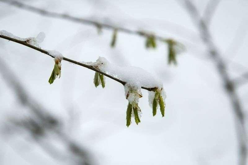 Волгоградцев на выходные ждут потепление, мокрый снег и гололед