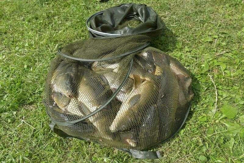 Региональный парламент предложил ужесточить наказание браконьерам
