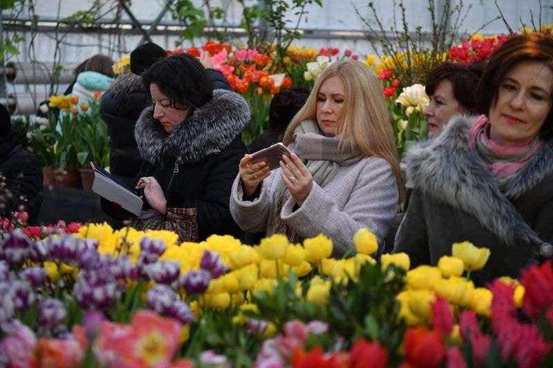 Волгоградских цветочников накажут за торговлю первоцветами