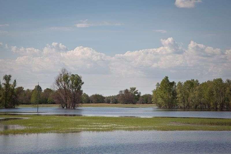 В регионе объявят охоту на гусей и селезней