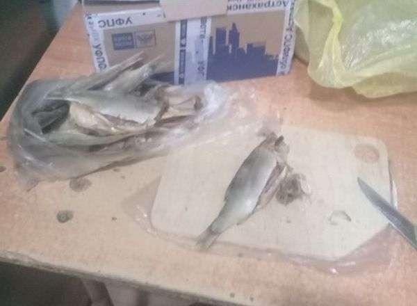 Осужденным Волгограда пытались передать наркотическую рыбу