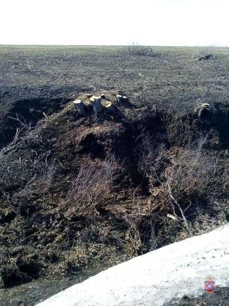 Безработный волгоградец «покосил» дубовую рощу в Даниловском районе