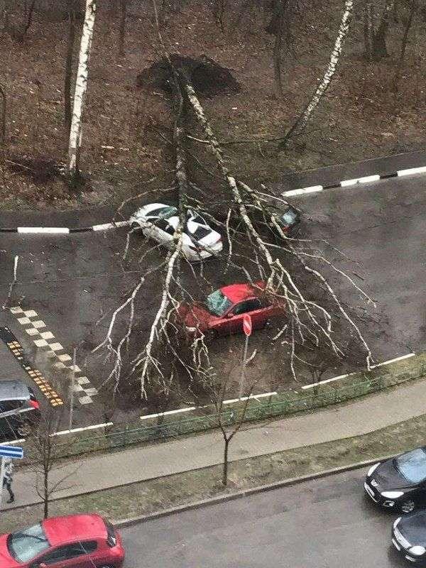 В Москве ураганом повалило дерево на трехмесячного ребенка