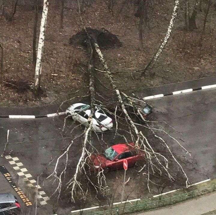 В МЧС предупредили о возможном продолжении урагана в Москве