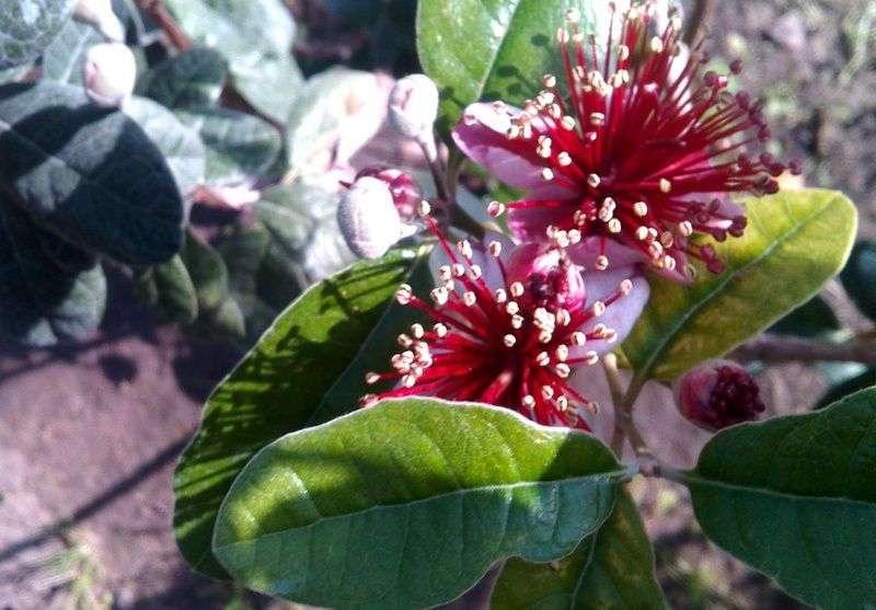 В оранжерее ботанического сада зацвела экзотика