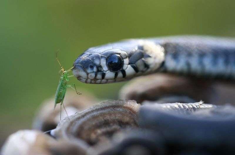 Волгоградцы начали встречать на своем пути страшных змей