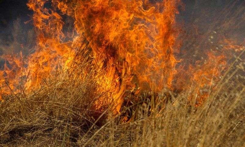 Волгоградцам объявлен особый противопожарный режим