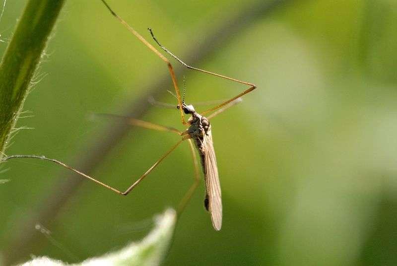 Как выиграть войну с комарами