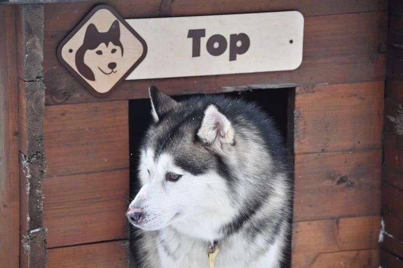 Волгоградским заводчикам собак продавали сомнительный корм