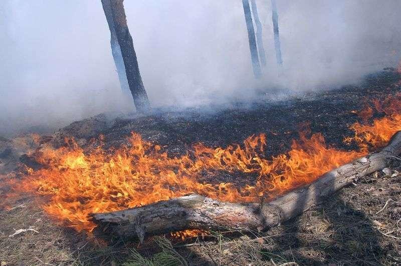 Первый в этом году ландшафтный пожар локализован возле поселка Волгодонской