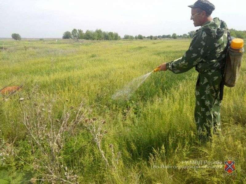 Волгоградские полицейские нашли поля с дикой коноплей
