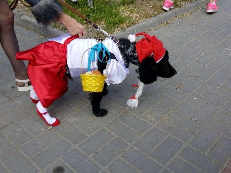В Волгограде собаки с харизмой устроили модный показ