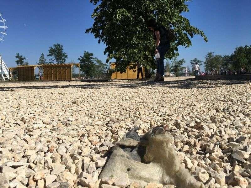 ЦПКиО встретил туристов засухой