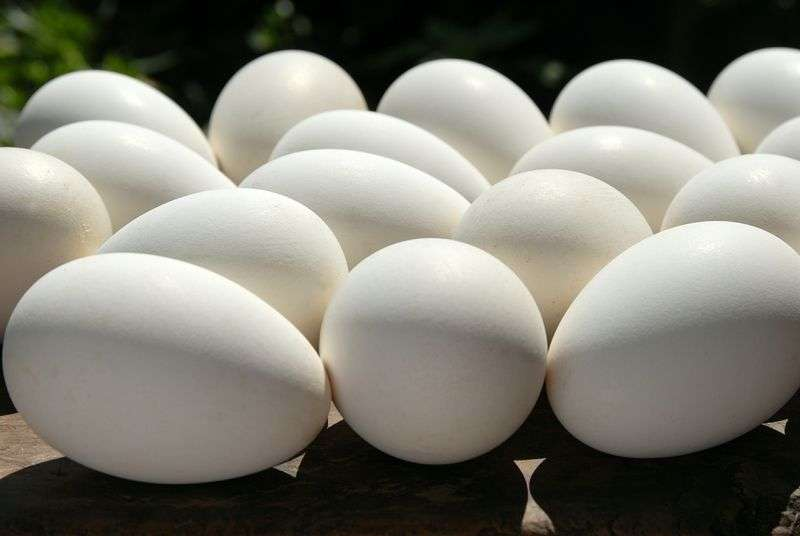 Специалисты нашли опасные яйца у волгоградского бизнесмена