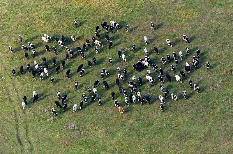 Под Волгоградом возбудили уголовное дело по факту жесткого убийства коров