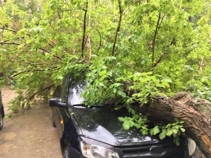 В Волгограде непогода повалила деревья на машины