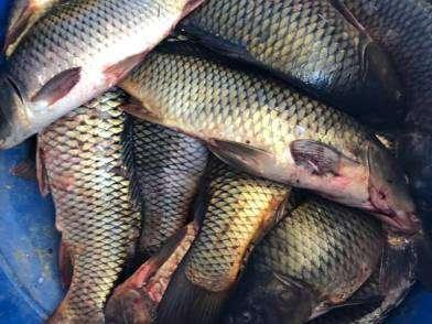Под Волгоградом задержали браконьеров с богатым уловом